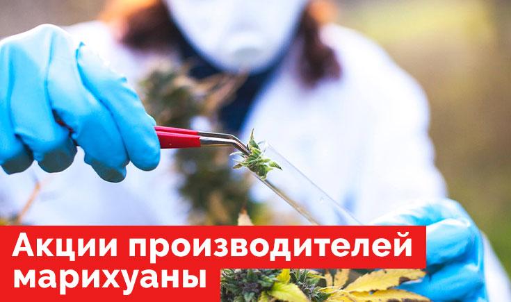 Акции производителей марихуаны на начало 2021 года